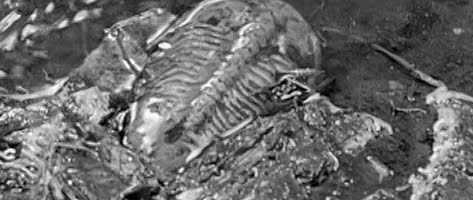 godzilla_trilobite-473x200
